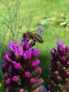 To Bee Or Not To Bee In Kelowna B.C.